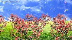 梅花岭风景视频素材