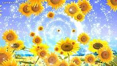 向日葵的微笑LED高清視頻背景