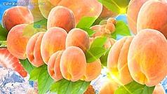 桃子广告视频素材