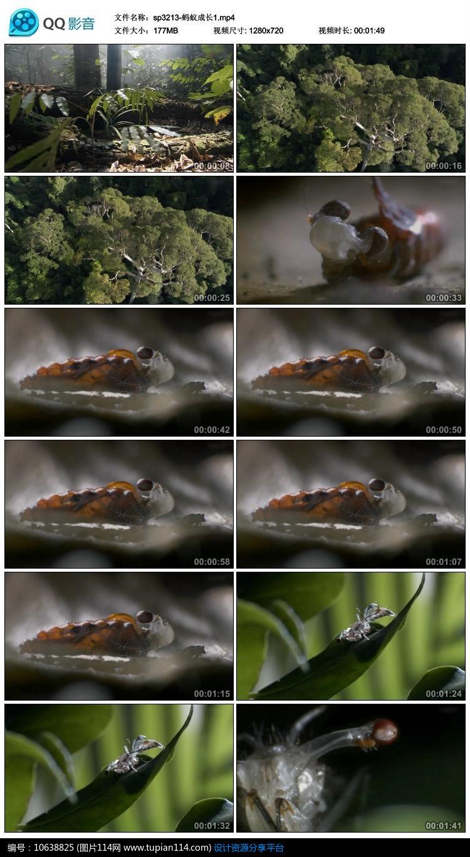 [原创] 蚂蚁成长视频素材