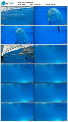 水族馆里的海豚实拍素材