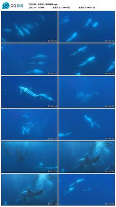 灰海豚花纹海豚视频素材