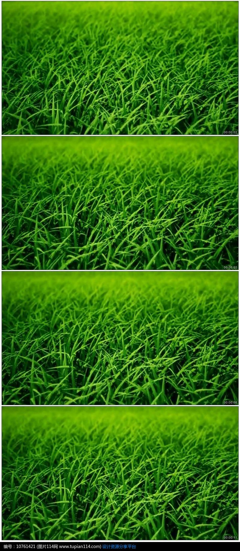 [原创] 绿色清新阳光草地大自然高清视频