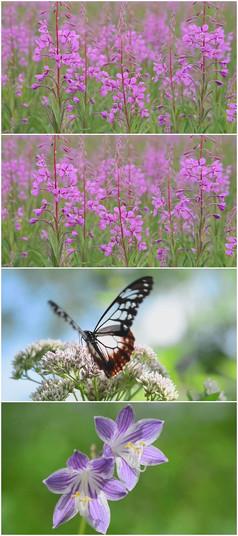 亲近自然的各类小花与蝴蝶视频素材
