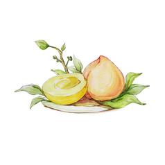 手绘水彩桃子