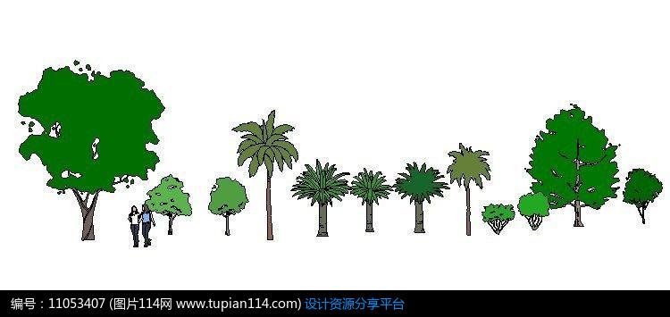 [原创] 手绘热带乔灌木植物