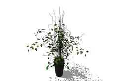 小叶绿色植物花艺