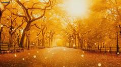 金秋叶飘落树林森林思念视频