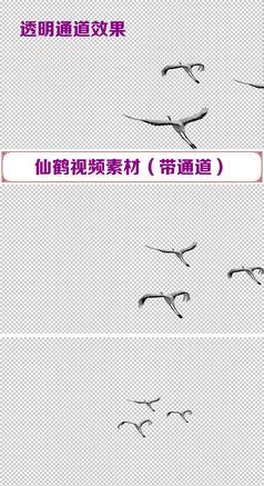仙鹤f飞翔视频素材带通道
