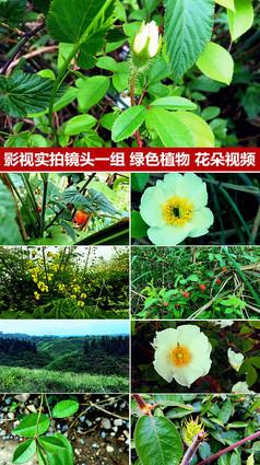 影视实拍镜头一组绿色植物花朵树叶视频
