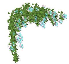 开花的藤蔓植物SU