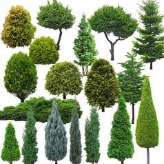 常用常绿乔木高清psd素材