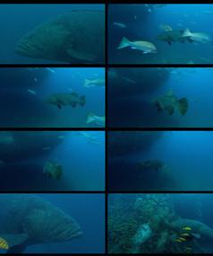 深海鱼视频素材