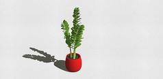 红底底座含羞草盆景3D素材