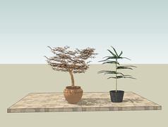 摆放在庭院地面上的盆栽SU