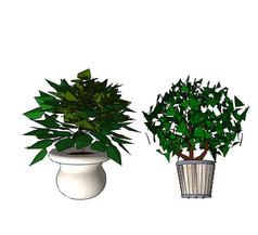 灌木盆栽SU模型