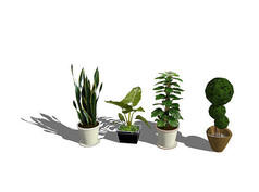 室内精致盆栽SU模型