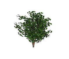 绿色大灌木SU