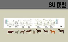 罗马人马类SU模型合集