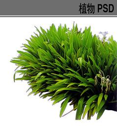 边角水生植物素材