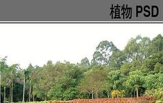 背景林PSD植物素材
