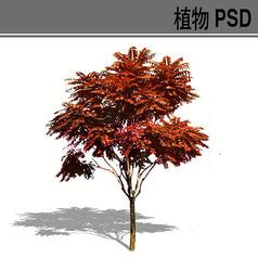 火炬树PSD植物素材