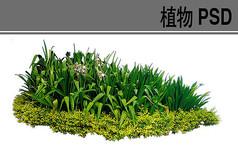 水生植物素材