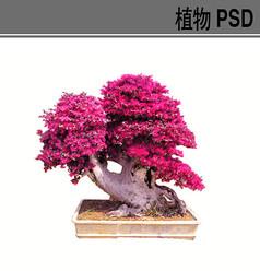 造型盆景PSD植物素材