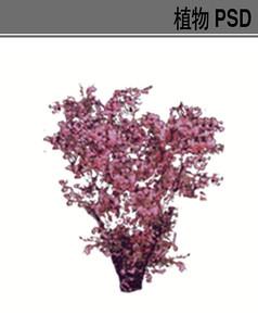 紫荆PSD植物素材