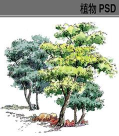 手绘植物ps素材