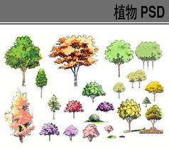手绘彩色植物psd素材