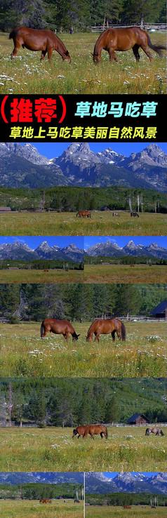 草地上马吃草美丽自然风景