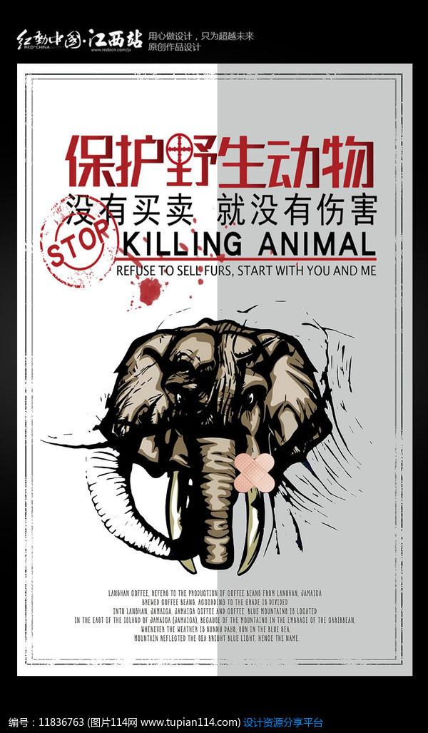[原创] 简约保护野生动物海报设计