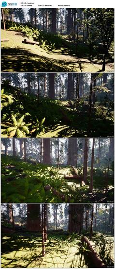 森林公园实拍视频