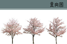 梅花树PS素材