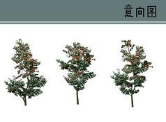 山茶花树PS素材