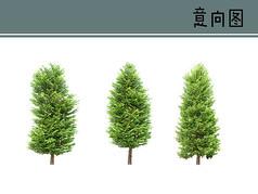 水杉植物素材
