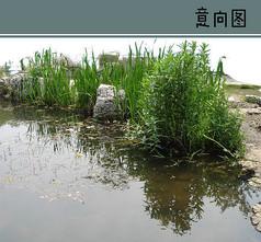 小溪植物景观素材