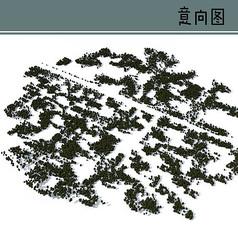 树林种植疏密鸟瞰素材