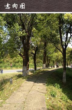 中式块石园路