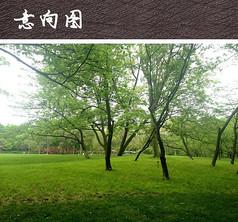 公园大草坪景观