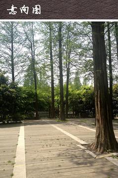 公园木质铺装
