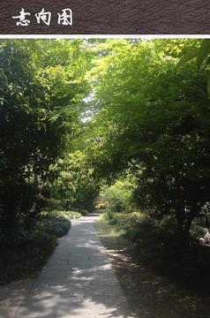 公园林间道路铺装设计