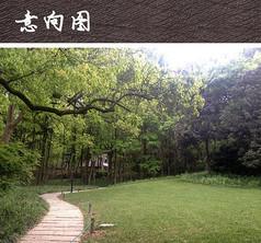 公园绿化植物