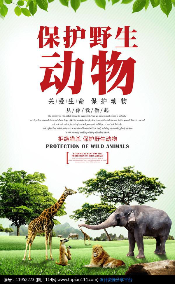 [原创] 保护野生动物海报设计