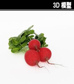 红萝卜3D模型