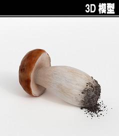 红头蘑菇3D模型