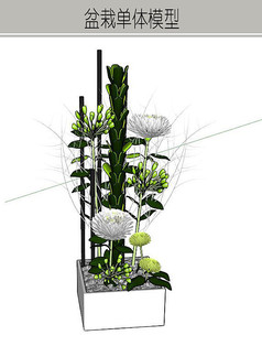 花卉组合小盆栽