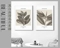 素描手绘植物装饰画