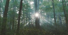 树林日出视频